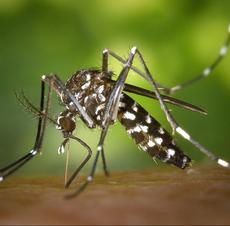 Lire la suite : Moustique tigre : soyez vigilant !